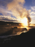 Bison Wildlife Grazing by Old Faithful Geyser, Yellowstone National Park, Wyoming, USA Photographic Print by Adam Jones