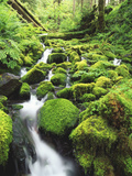 View of Olympic National Park, Stream, Moss-Covered Rocks, Washington, USA Photographic Print by Stuart Westmorland