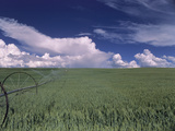 Green Wheat Field, Clouds, Agriculture Fruitland, Idaho, USA Photographie par Gerry Reynolds