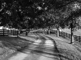 Row of Trees and Country Lane at Dawn, Bluegrass Region, Kentucky, USA Fotografisk trykk av Adam Jones