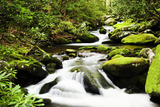 Cascading Creek in the Park, Great Smoky Mountains National Park, Tennessee, USA Photographic Print