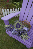Dried Lavender on Purple Chair at Lavender Festival, Sequim, Washington, USA Photographic Print by John & Lisa Merrill