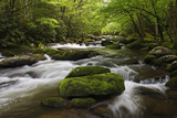Cascading Creek, Great Smoky Mountains National Park, Tennessee, USA Photographic Print