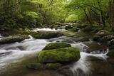 Cascading Creek, Great Smoky Mountains National Park, Tennessee, USA Lámina fotográfica