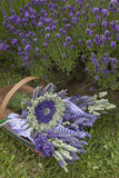 Wrapped Bouquets of Dried Lavender at Lavender Festival, Sequim, Washington, USA Fotografie-Druck von John & Lisa Merrill