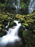View of Proxy Falls at Mckenzie Pass, Deschutes National Forest, Oregon, USA Photographic Print by Stuart Westmorland