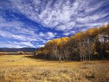 Autumn Aspens and Old Barn, Big Snowy Mountains, Judith Gap, Montana, USA Photographic Print by Chuck Haney