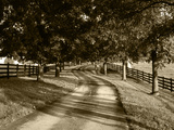 Row of Trees and Country Lane at Dawn, Bluegrass Region, Kentucky, USA Photographic Print by Adam Jones