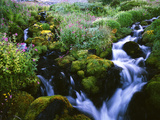 View of Waterfall in Forest, Oregon, USA Photographic Print by Stuart Westmorland