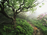 Craggy Gardens, Pisgah National Forest, North Carolina, USA Photographic Print by Adam Jones