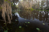 Texas's Largest Natural Lake, Caddo Lake, Texas, USA Photographic Print by Larry Ditto