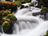 View of Waterfall with Autumn Maple Leave at Mt Hood National Forest, Oregon, USA Photographic Print by Stuart Westmorland