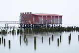 Old Fishing Cannery on the Columbia River, Astoria, Oregon, USA Photographic Print by Jamie & Judy Wild