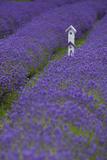 Farm Birdhouse with Rows of Lavender at Lavender Festival, Sequim, Washington, USA Photographic Print by John & Lisa Merrill