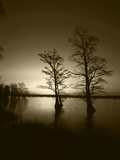 Trees Reflected in Water, Reelfoot National Wildlife Refuge, Tennessee, USA Photographic Print by Adam Jones