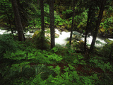 Nickel Creek Cascading Through Forest, Mount Rainier National Park, Washington, USA Photographic Print by Adam Jones