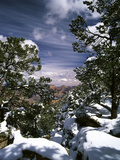 Grand Canyon National Park, Trees Covered with Snow, Arizona, USA Photographic Print by Adam Jones