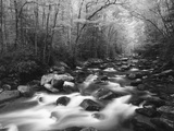 Canopy over Big Creek, Great Smoky Mountains National Park, North Carolina, USA Photographic Print by Adam Jones