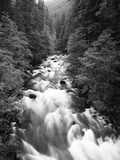 Ohanapecosh River, Mount Rainier National Park, Washington, USA Photographic Print by Adam Jones