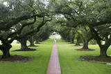 Oak Alley Plantation, Alley of Oaks, Virginia Live Oaks, Louisiana, USA Photographic Print by Jamie & Judy Wild