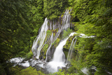 Panther Creek Falls, Waterfall from Big Creek, Gifford Pinchot National Forest, Washington, USA Photographic Print by Jamie & Judy Wild