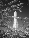 Monument with Cherry Blossom in Foreground, Washington DC, USA Photographic Print by Scott T. Smith