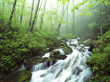 View of Cove Creek Covered with Fog, Pisgah National Forest, North Carolina, USA Photographic Print by Adam Jones