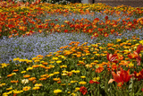 Flower Garden, Pollard Park, Blenheim, Marlborough, South Island, New Zealand Photographic Print by David Wall