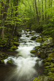 Stream at Roaring Fork Trail in the Smokies, Great Smoky Mountains National Park, Tennessee, USA Photographic Print by Joanne Wells