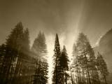 Sunlight Through Pine Forest in Yosemite Valley, Yosemite National Park, California, USA Photographic Print by Adam Jones