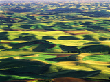 Contour Farming in Palouse Farm, Washington, USA Photographic Print by Adam Jones