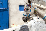 Donkey Waits at Cobbled Stairway, Santorini, Greece Photographic Print by David Noyes