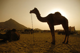 Annual Pushkar Camel Festival, Rajasthan, Pushkar, India Photographic Print by David Noyes