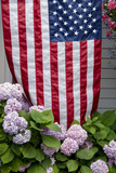 Hydrangeas with American Flag, Block Island, Rhode Island, USA Fotografie-Druck von Cindy Miller Hopkins