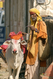 Sadhu, Holy Man, with Cow During Pushkar Camel Festival, Rajasthan, Pushkar, India Photographic Print by David Noyes