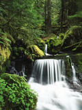 Whitewater Creek Falls, Willamette National Forest, Oregon, USA Photographic Print by Stuart Westmorland