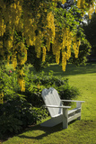 Garden Bench, Schreiner's Iris Gardens, Keizer, Oregon, USA Photographic Print by Rick A. Brown