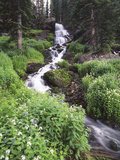 Stream Lined with Bitter Cress, Mountain Bluebells, Colorado, USA Photographic Print by Adam Jones