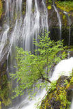 Panther Creek Falls, Waterfall from Big Creek, Gifford Pinchot National Forest, Washington, USA Photographic Print by Jamie & Judy Wild