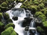 Creek Near Sol Duc Falls, Olympic National Park, Washington State, USA Photographic Print by Stuart Westmorland