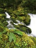 View of Waterfall and Old-Growth Forest, Mt Hood National Forest, Oregon, USA Photographic Print by Stuart Westmorland
