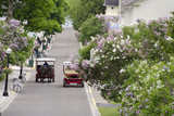 Lilac Lined Street with Horse Carriage, Mackinac Island, Michigan, USA Fotografie-Druck von Cindy Miller Hopkins