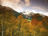 Aspen Tree, Snowcapped Mountain, San Juan National Forest, Colorado, USA Photographic Print by Stuart Westmorland