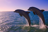 Dolphins Leaping from Sea, Roatan Island, Honduras Fotografisk tryk af Keren Su