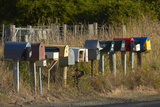 Rural Letterboxes, Otago Peninsula, Dunedin, South Island, New Zealand Photographic Print by David Wall