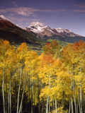 Aspen Tree, Snowcapped Mountain, San Juan National Forest, Colorado, USA Photographie par Stuart Westmorland