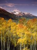 Aspen Tree, Snowcapped Mountain, San Juan National Forest, Colorado, USA Fotografie-Druck von Stuart Westmorland