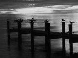 View of Birds on Pier at Sunset, Fort Myers, Florida, USA Stampa fotografica di Adam Jones