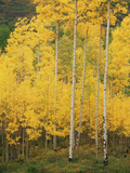 View of San Juan National Forest in Autumn, Colorado, USA Photographic Print by Stuart Westmorland