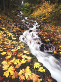 View of Wahkeena Falls at Columbia Gorge National Scenic Area, Oregon, USA Photographic Print by Stuart Westmorland